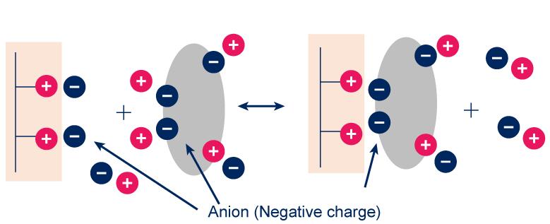 Anion