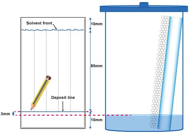 Deposit line & Solvent front