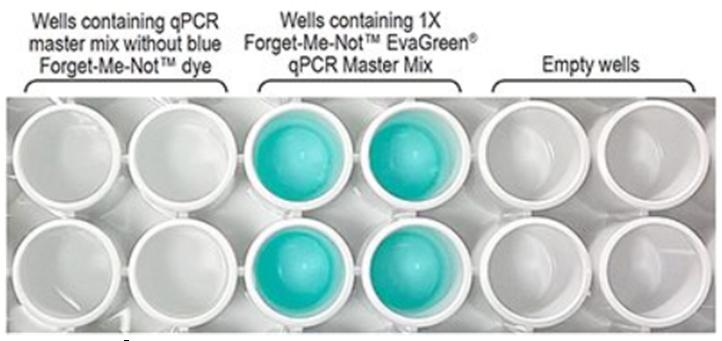 Forget-Me-Not™ EvaGreen® qPCR Master Mix